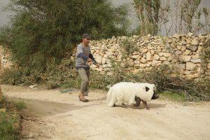 Das Schwein von Gaza mit Cinelokal und Willkommen in Löbtau @ Willkommen in Löbtau e.V.   Dresden   Sachsen   Deutschland